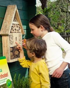 Wildbienen, interessante Insekten von großer Bedeutung