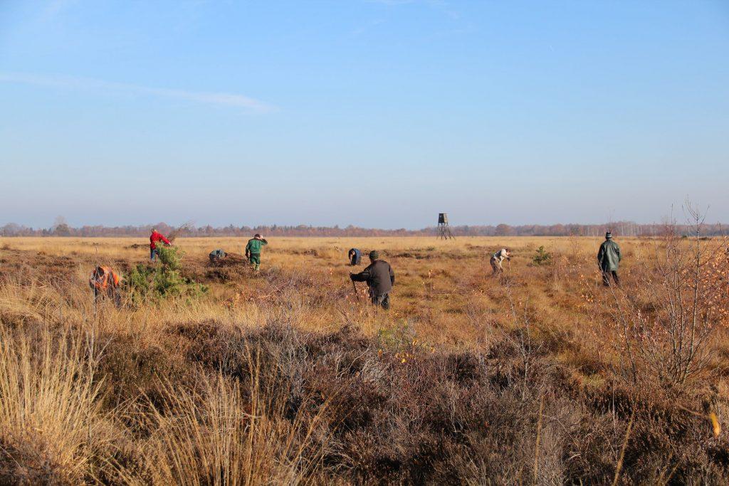 Teil der Helfergruppe bei Entkusselungsarbeiten im Recker Moor